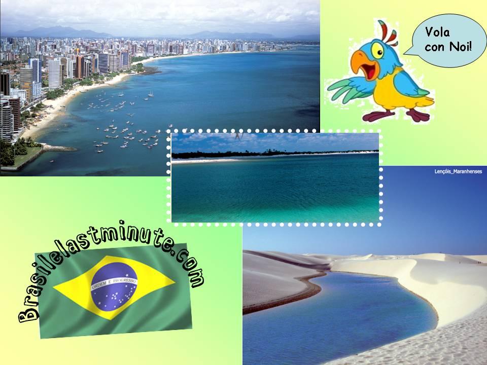 brasilelastminite